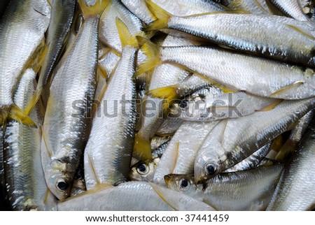 Fresh fish as background - stock photo