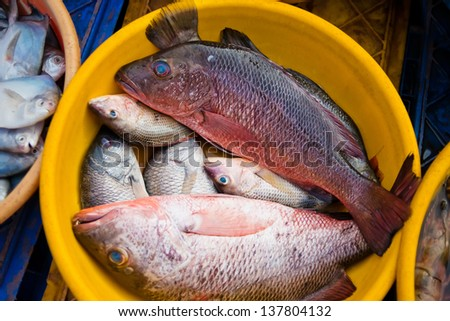 Fresh fish at the fish market - stock photo