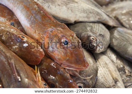 Fresh fish at the market place - stock photo