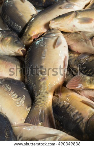 Fresh fish carp. Texture scales, tail and fins.