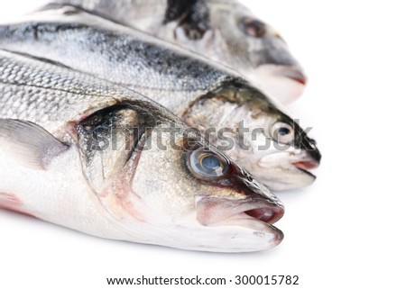 Fresh fish collection isolated on white - stock photo