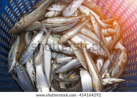 fresh fish in basket Caught by placing nets of fishermen. - stock photo
