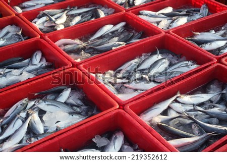fresh fish in container box - stock photo