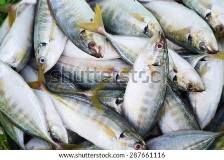 fresh fish in market - stock photo