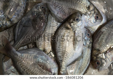 Fresh Fish in the Fish Market - stock photo