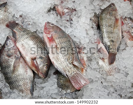 fresh Fish in the market. - stock photo