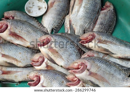 Fresh fish in the market - stock photo