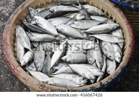 Fresh fish (Mackerel) in the basket at morning market,Thailand - stock photo