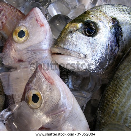 fresh fish on ice for sale in fish market - stock photo