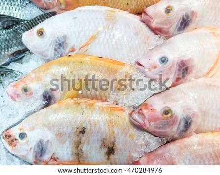 Fresh fish on sell in market. (Nile tilapia, Mango fish, Nilotica)