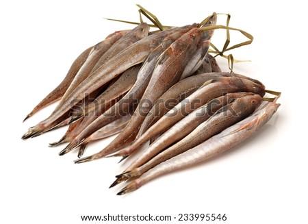 fresh flathead fish on white background - stock photo