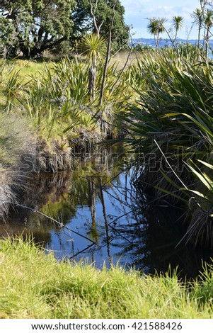 Fresh flora of coastal marches in New Zealand. - stock photo