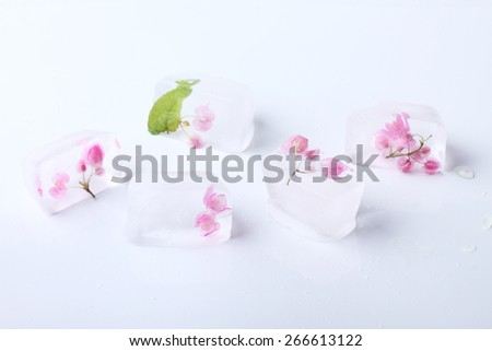 Fresh flower  frozen in ice cubes isolated on white background. Fresh for summer drinks - stock photo