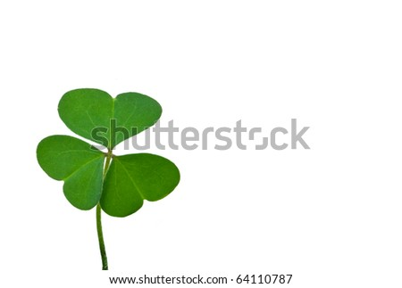 Fresh four leaf clover isolated on white - stock photo