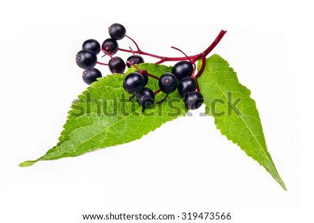 Fresh fruit  black elderberry herb - stock photo