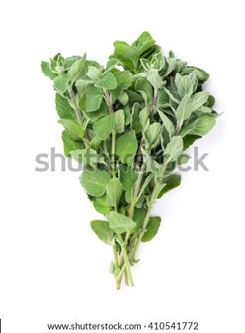 Fresh garden oregano herb. Isolated on white background - stock photo
