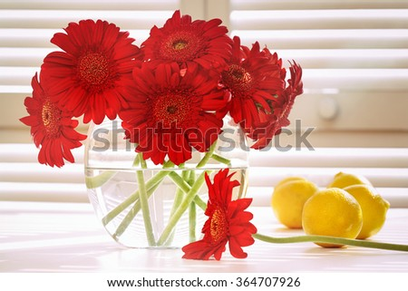Fresh gerbera daisy in on table in front of window - stock photo
