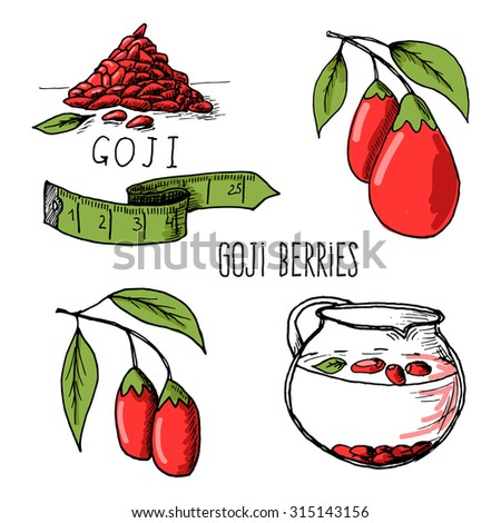 Fresh Goji Berries with leaves on white background. Hand drawn sketch of goji berries - stock photo