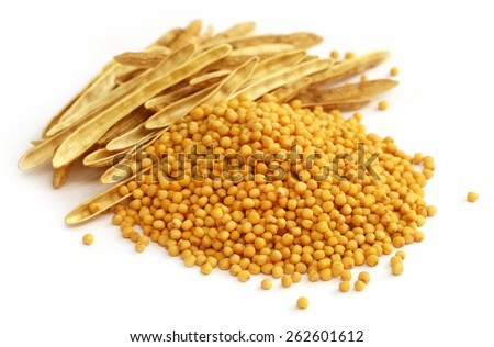 Fresh golden mustard with empty pods over white background - stock photo