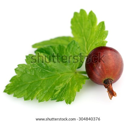 Fresh gooseberry with leaf isolated on white - stock photo