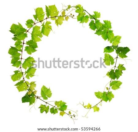 Fresh grapevine circle border on white background - stock photo