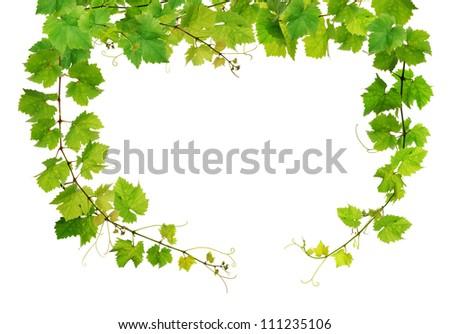 Fresh grapevine frame - stock photo