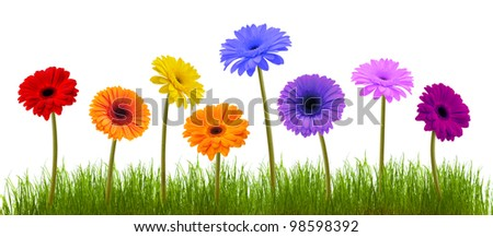 Fresh grass and daisies, isolated on white background - stock photo