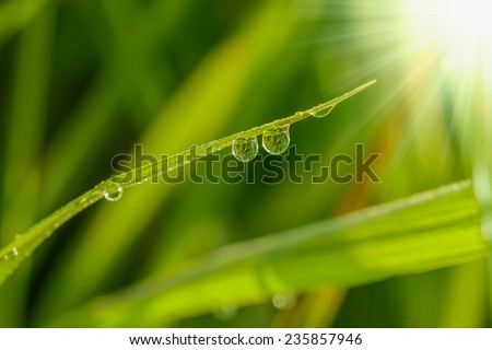 Fresh grass green with dew drops close up - stock photo