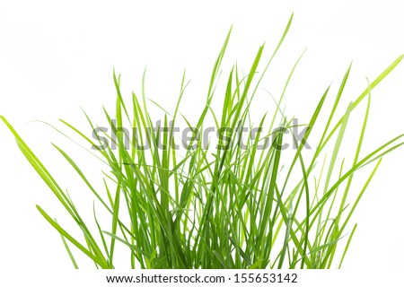 Fresh grass isolated on white background - stock photo