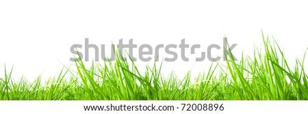 Fresh grass isolated on white background - stock photo