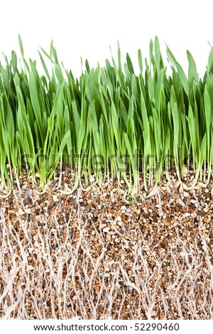 Fresh Grass Root Underground Cross Section Backgrounds - stock photo