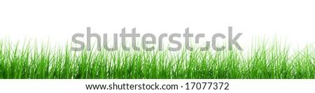 fresh grass row - stock photo