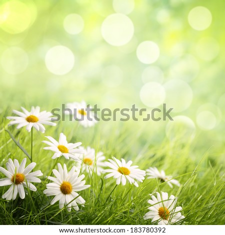 Fresh grass with Daisies,Natural background.