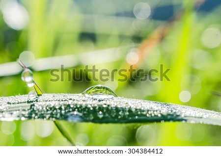 Fresh grass with dew drops and sunshine - stock photo