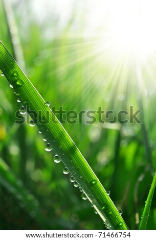 Fresh grass with dew drops close up - stock photo