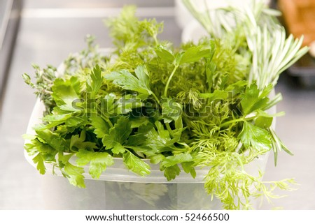 fresh green aromatic spices for salad