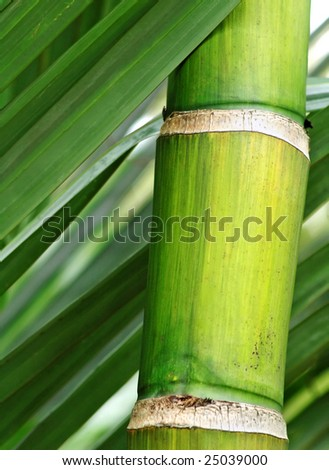 fresh green bamboo - stock photo
