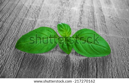 fresh green basil leaves on a wooden background