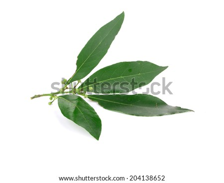 Fresh green bay leaves. Isolated on the white background.