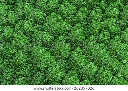 Fresh green broccoli background with expressive texture - stock photo