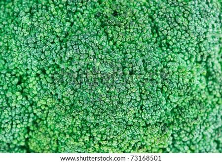 Fresh green broccoli cabbage head, food background - stock photo