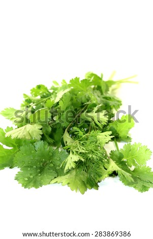 fresh green bunch of coriander on a light background - stock photo