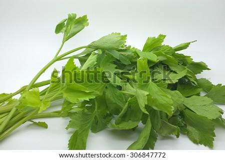 Fresh green celery - stock photo