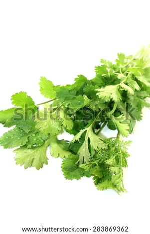 fresh green coriander on a light background - stock photo