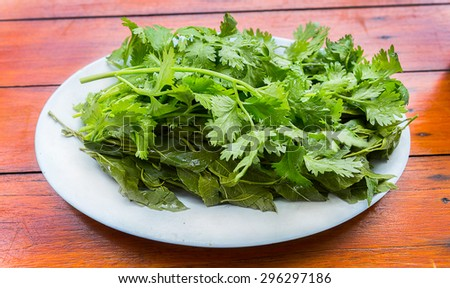 Fresh green coriander on a wooden table. - stock photo