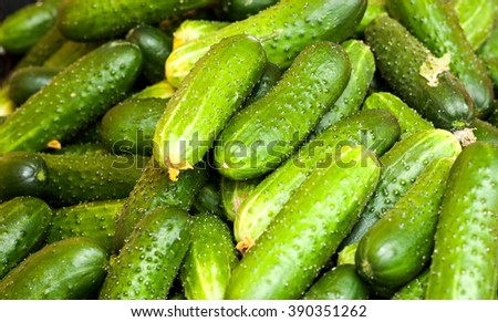 fresh green cucumber collection outdoor on market macro