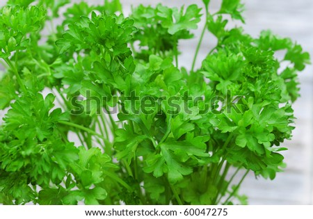 Fresh green curly parsley, shallow dof