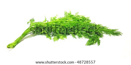 Fresh green dill isolated on white - stock photo