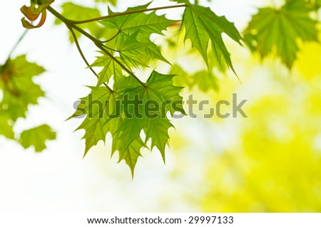 Fresh green eaves in forest