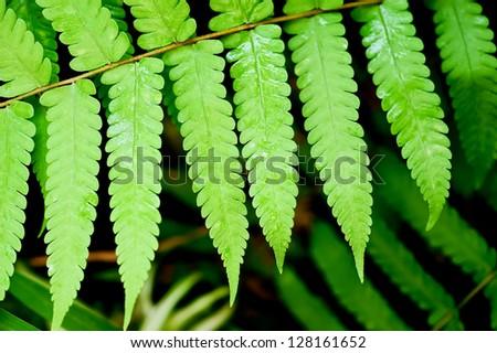 fresh green fern leave - stock photo